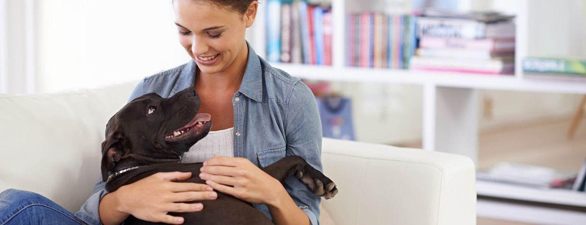 9 cuidados para quem tem animais de estimação em apartamento