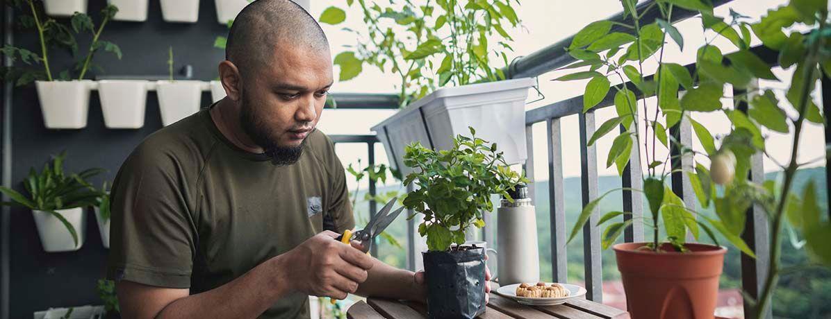 Horta vertical em apartamento: aprenda como fazer